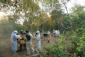 Visita ao apiário dos Kamayurá - Atividade de campo.