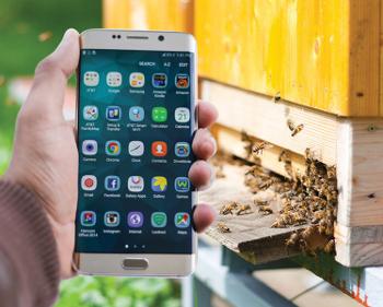 apicultura-no-celular
