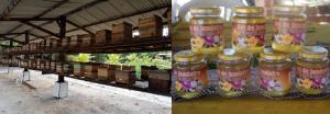 Figura 3 - Meliponário racional com colmeias do modelo INPA (Instituto Nacional de Pesquisa da Amazônia) e mel da abelha jandaíra (Melipona subnitida) envasado em recipientes adequados, lacrados e rotulados.