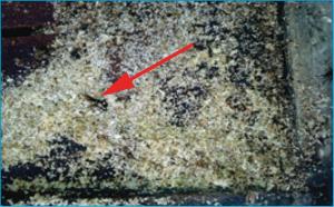 Figura 03. Resíduos de favos e restos de abelhas (seta indicativa). - Fonte: autores.