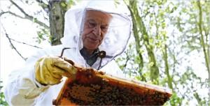 Walter Klumpp, apicultor há 30 anos e presidente do clube local de apicultores, é responsável pelas abelhas do aeroporto de Düsseldorf. CréditoAndreas Wiese / Aeroporto Internacional de Düsseldorf.