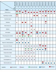 Quadro 2. Presença de artrópodes em colmeias de meliponíneos de agosto de 2017 a julho de 2018.