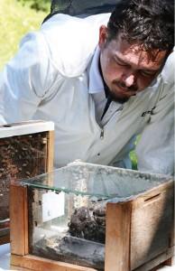 A padronização à norma federal não retira o terroir do mel de abelha sem ferrão. Foto: Ronaldo Rosa.