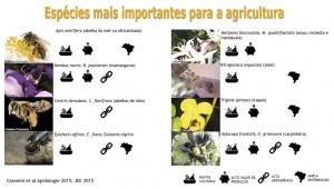 Figura 1. Espécies de abelhas mais importantes para a agricultura, citadas como polinizadores do maior número de culturas agrícolas, com maior valor de produção, mais dependentes por polinizadores animais e ampla distribuição geográfica.