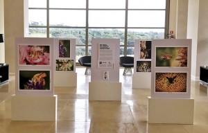"""Exposição Fotográfica """"Sem Abelha, Sem Alimento: um olhar atento à biodiversidade dos maiores polinizadores da Natureza, do fotógrafo Sidney Cardoso, e curadoria da ONG Bee or Not to to Be."""