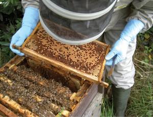Um apicultor é um pouco de tudo, carpinteiro, pintor, professor!