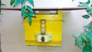 Figura 3. Detalhe da fixação do alimentador modelo Roso em colmeia de abelha guaraipo. As abelhas passam por dentro do alimentador, pelo túnel de entrada, para ingressar na colmeia.