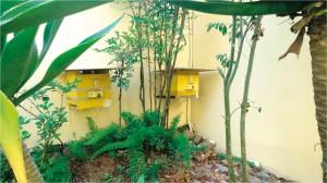 Figura 5. Colmeias de abelha guaraipo sendo suplementadas com alimento liquido por meio do alimentador modelo Roso.