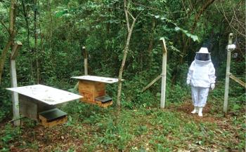O estudo analisou pólens coletados em apiários comerciais de Ribeirão Preto. Das 21 amostras analisadas, sete apresentaram presença significativa dos agrotóxicos Alacloro, Aldrin, Bioaletrina, Endossufan Alfa, Fempropatrim, Permetrina e Trifluralina.