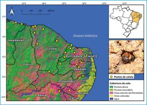 Figura 1 – Pontos de amostragem de Melipona subnitida ao longo da sua distribuição geográfica pelo nordeste do Brasil sobre um mapa de cobertura do solo (fonte: http://mapbiomas.org).