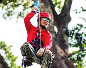 Através do rapel, o pesquisador escalou castanheiras que chegavam a 60 metros de altura. - Foto: Melquíades Costa.