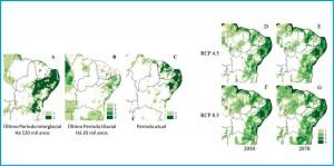 Figura 2. A esquerda se encontram os mapas de distribuição potencial de áreas climaticamente adequadas para Plebeia flavocincta no Último Interglacial (A), Último Máximo Glacial (B), no presente (C). A direita são os mapas de distribuição potencial de áreas climaticamente adequadas no futuro: (D) ano 2050 e RCP 4.5; (E) ano 2050 e RCP 8.5; (F) ano 2070 e RCP 4.5; e (G) ano 2070 e RCP 8.5. Os tons verdes representam áreas onde mais de um modelo se sobrepõe. RCP, em inglês, são os Caminhos Representativos de Concentração, ou seja, cenários futuros possíveis dependentes do nível de emissão de gases de efeito estufa na atmosfera. RCP 4.5 é um cenário moderado e o RCP 8.5 refere-se a um cenário em que as emissões continuam sempre aumentando.