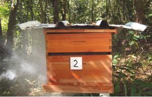 Figura 3. Espaço entre as caixas, onde as abelhas constroem fitas de própolis.